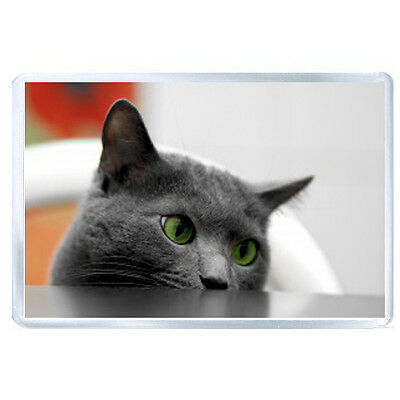 FRIDGE MAGNET cat muzzle eyes table look out 56563