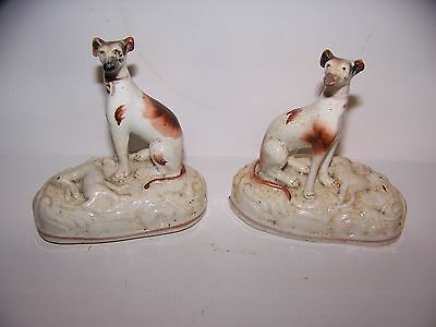 Staffordshire Whippet Greyhound Dogs