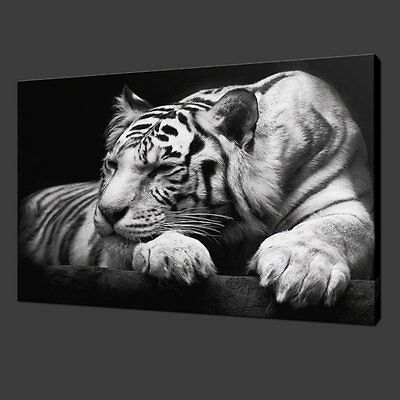 White Tiger On Black Modern [Framed] Picture Canvas Wall Art Prints Home Decor