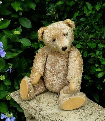 """LARGE 30"""" ANTIQUE VERY OLD GERMAN STEIFF BEAR, BUTTON IN EAR c.1940's - 1950's"""