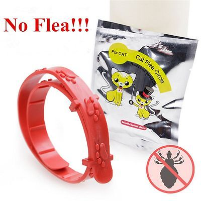 Cat Kitten Adjustable Pet Collar Neck Strap Anti Flea Mite Acari Tick Remedy