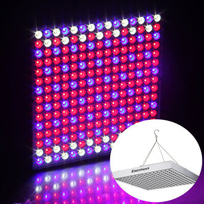 60W LED Grow Light Hydroponic Full Spectrum Plant Lamp Panel Veg Flower Red+Blue