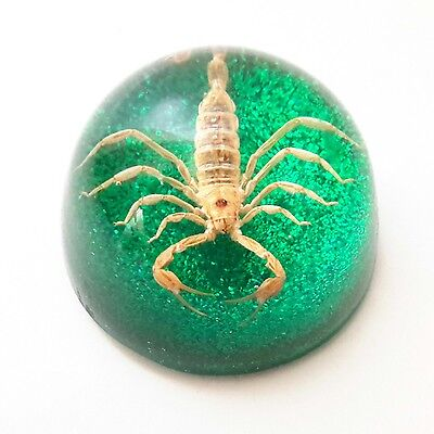 VTG Scorpion Acrylic Resin Paperweight Southwestern Real Natural Specimen Green