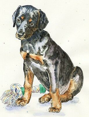 DOBERMAN PINSCHER Original Watercolor on Ink Print Matted 11x14 Ready to Frame