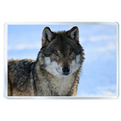 AU FRIDGE MAGNET wolf predator waiting eyes 55998