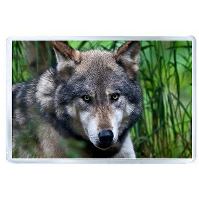 AU FRIDGE MAGNET wolf face color predator 96065