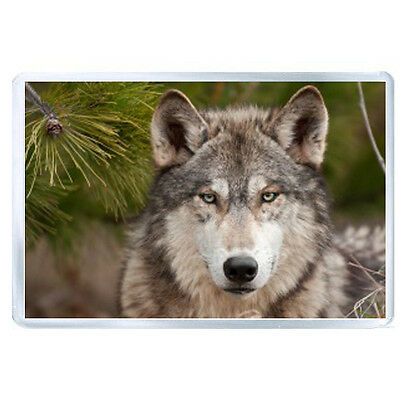 AU FRIDGE MAGNET wolf fur snout 72370