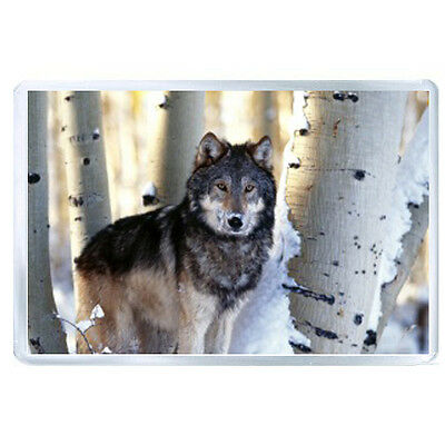 AU FRIDGE MAGNET trees winter snow wolf 77082