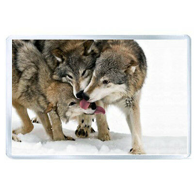 AU FRIDGE MAGNET wolf tongue lick snow three 1258