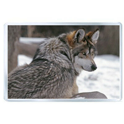 AU FRIDGE MAGNET wolf winter grey evil 1257