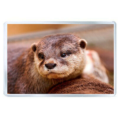 AU FRIDGE MAGNET otter face eyes animal 26925