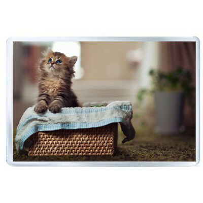 AU FRIDGE MAGNET kitty fluffy basket material curiosity watch 53361