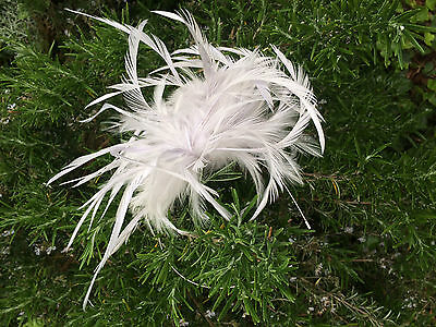 Ladies NEW Fascinator Wedding Occasion Ascot Silver Grey Ivory Cream Feathers