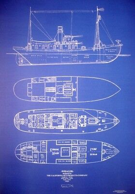 "Vintage California Whale Hunting Ship Blueprint 1923 24""x34"" (043)"
