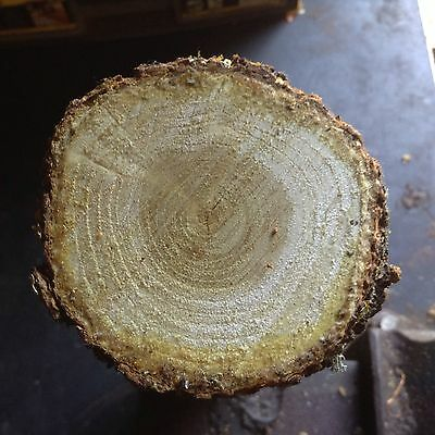 English Mulberry Wood For Turning Spindle