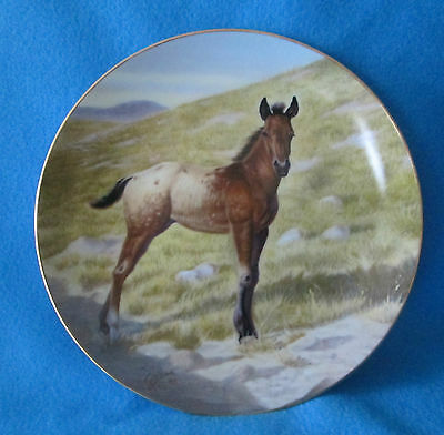 The Appaloosa Collectible Plate by Perillo Vague Shadows # 1 The Colts Series