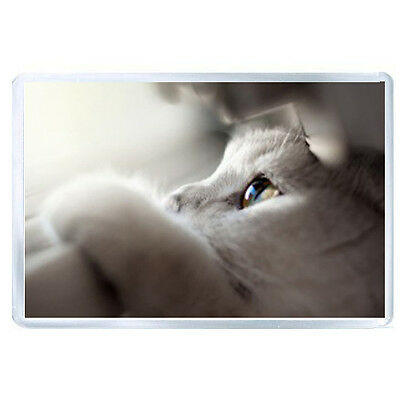 ES JUMBO IMAN cat face eyes paws looking out 31777