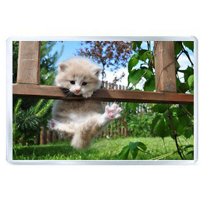 ES JUMBO IMAN kitty furry hung grass resting 56373