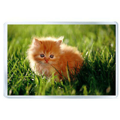 ES JUMBO IMAN kitty furry grass sunlight 52638