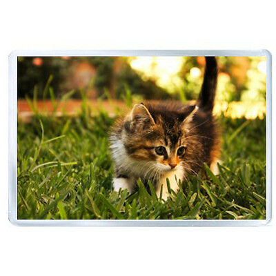 ES JUMBO IMAN kitty furry grass sunlight 56237