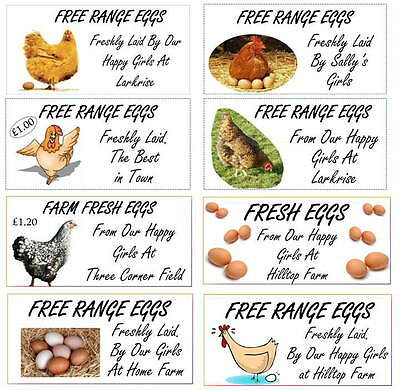24 x SMALL CUSTOMISABLE CHICKEN HEN EGG BOX LABELS 70 x 35mm