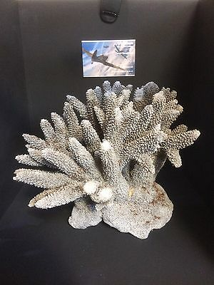 vintage coral piece Good Size Fish tank? Collectible Fossils Rocks