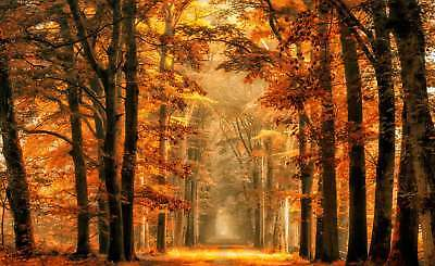 WALL MURAL PHOTO WALLPAPER XXL Forest Lane Unpaved Road Trees Autumn (1X-1026079