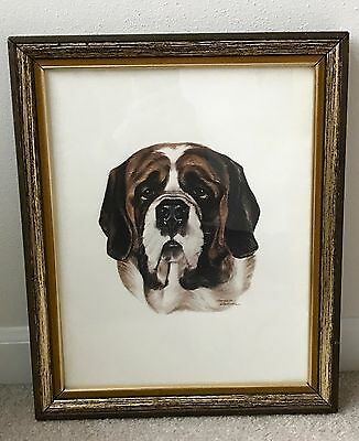 Beautiful St. Bernard Dog Head ~ Framed Print