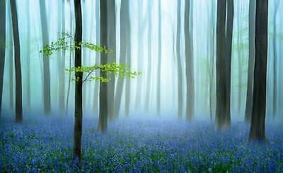 WALL MURAL PHOTO WALLPAPER XXL Forest Woods Meadow Trees Flowers (1X-1114173WS)