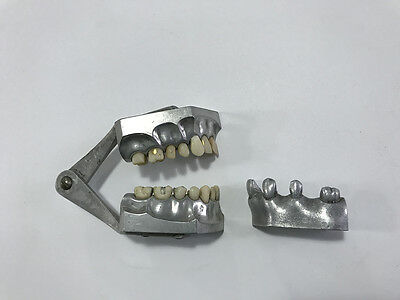 Columbia dentoform Metal Teeth with Gold Fillings 1920's typodont