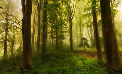 WALL MURAL PHOTO WALLPAPER XXL Woodland Forest Woods Trees Greenery (1X-1140641W