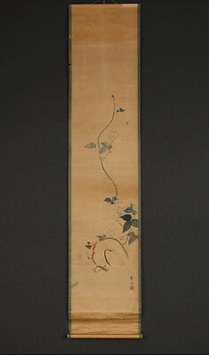 "Japanese Hanging Scroll : ""Cat""  w/box  [no.j6252]"