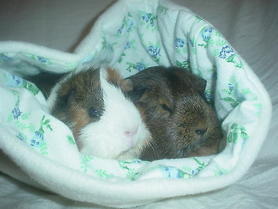 Chucklebunnies Guinea pig cuddle bed pocket for 2, comfy cream fleece, roses
