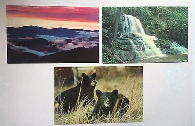 Great Smoky Mountains National Park Tennessee 3 Vintage Postcards
