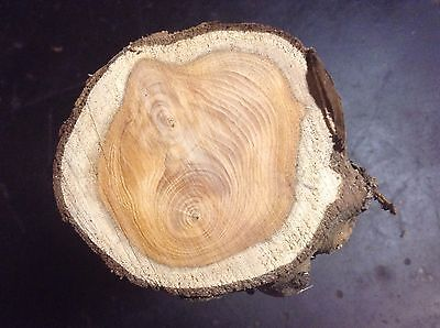 Seasoned Yew Wood For Turning Spindle Or Carving
