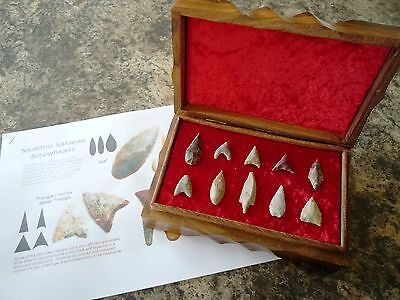 10 x Quality Neolithic Arrowheads in Wooden Box - 4000BC (1021)