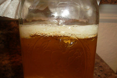"4"" SCOBY + 1 FULL CUP strong starter kombucha. Fresh ORGANIC MOTHER / MUSHROOM."