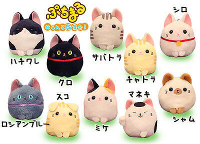 AMUSE Puchitto Neko Cat Plush Charm Strap *Ship Fast USA* *Kawaii * Alpacasso