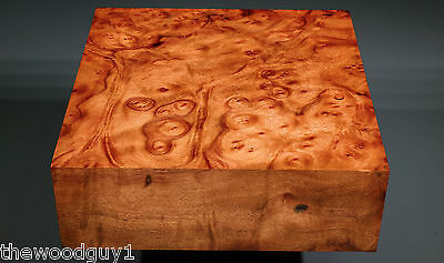 x1376  -     Large  CAMPHOR BURL   - Turning/Craftwood - Air Dried