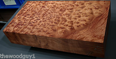 x1423  -     Large  CAMPHOR BURL   - Turning/Craftwood - Air Dried