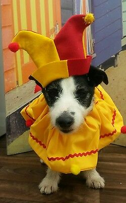 Dogs fancy dress clown jester costume, handmade by Mrs Nibbles in red & yellow