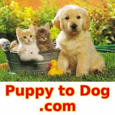 Puppy to Dog .com - Premium Web Domain Name for Sale - Pets Cat Dog Breeder