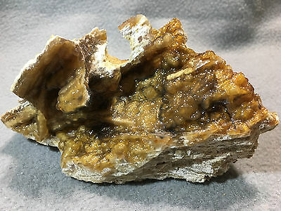 Fossilized Coral Botryoidal Clusters 6-16-9-17