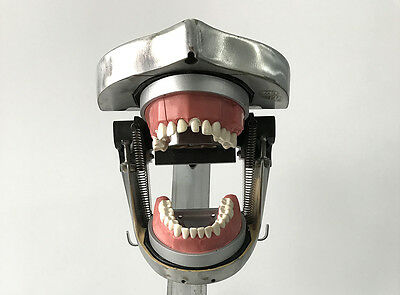 Aluminum Dental Jaw Manikin for Dental Practice Dental Phantom