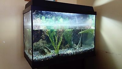 Juwel aquarium with stand and accessories