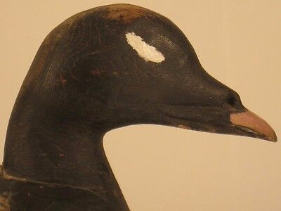 Duck Decoy White Wing Scoter Maine Antique Wooden Goose Shorebird