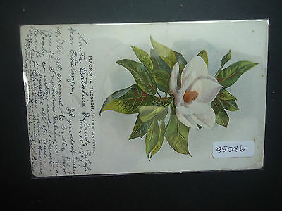 USA 1904 Picture Postcard Flower To England (Wigan 1905 + Avalon 1904 Postmark)