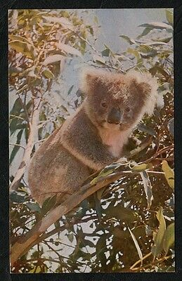k2962) VINTAGE INFORMATION CARD::SMOKEY THE KOALA FROM KANGAROO ISLAND AUSTRALIA