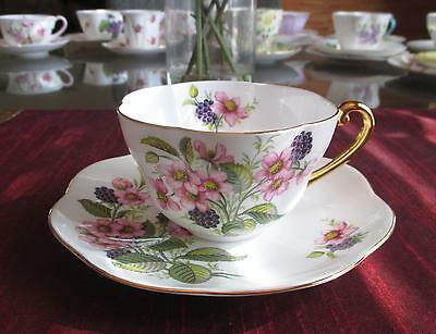 SHELLEY Fine Bone China   ** Ratauds BRAMBLE Blackberry** #2359  Warwick Shape