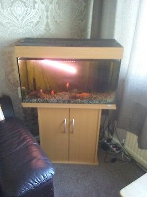 Large fish tank with heater